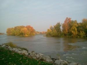 leaves river